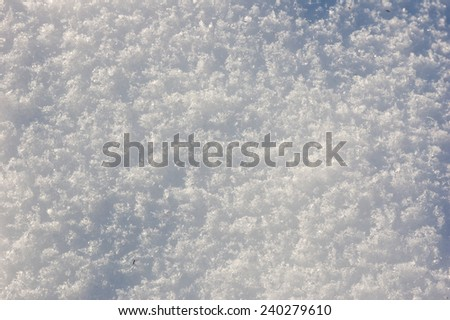 Trees fully covered by snow in winter day near backyard - stock photo