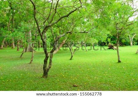 Trees garden in Thailand - stock photo