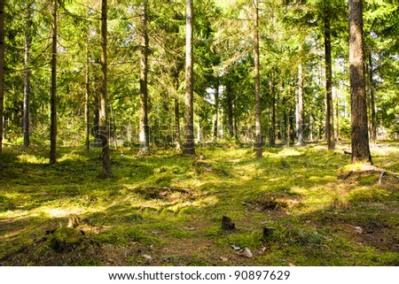 Trees growing in wood in summertime of year