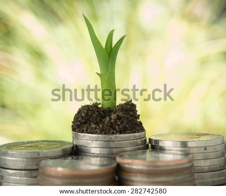 Trees growing on a pile of money Reflects business growth - stock photo