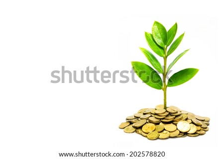 trees growing on coins - stock photo