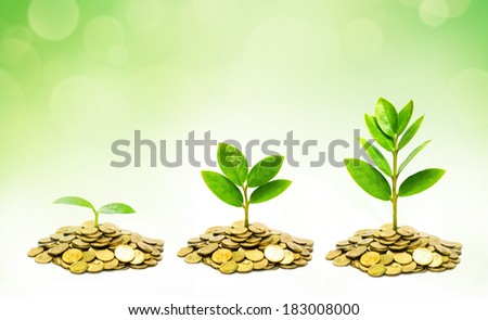 trees growing on coins / csr / sustainable development / trees growing on stack of coins - stock photo