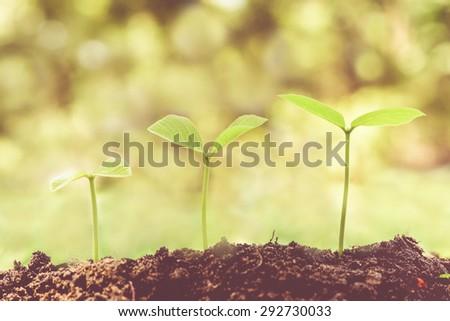 trees growing on coins in germination sequence with vintage tone