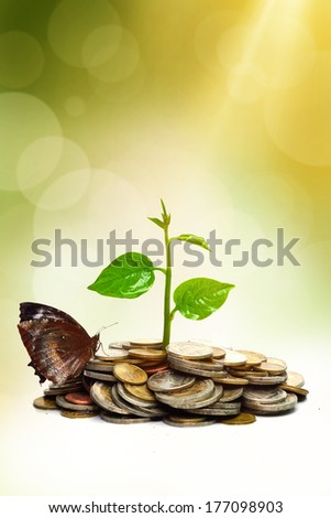 trees growing on coins  with a butterfly / csr / sustainable development / trees growing on stack of coins