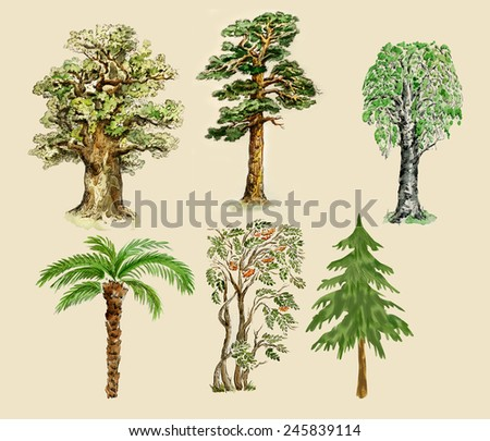 Trees illustration painted in vintage manner, isolated on buff background.