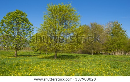 Trees in a field with wildflowers