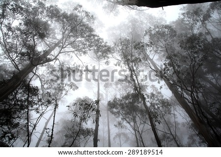 Trees in a Fog - stock photo