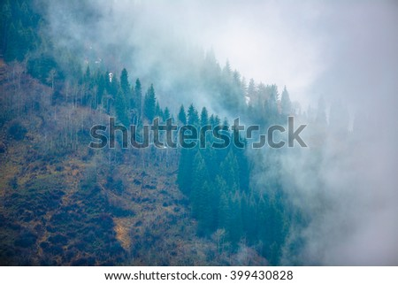 trees in a fog on the mountain - stock photo