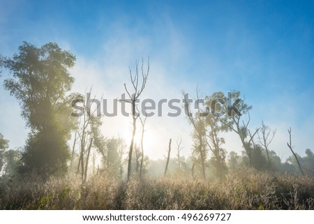 Trees in a foggy field at sunrise