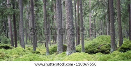 Trees in a forest, Sweden