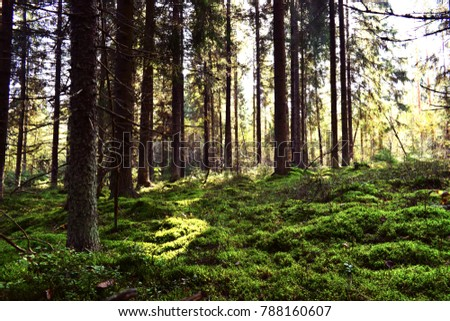 Trees in a forest with a moss carpet illuminated by the sun