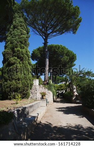 Trees in a garden, Amalfi, Province Of Salerno, Campania, Italy