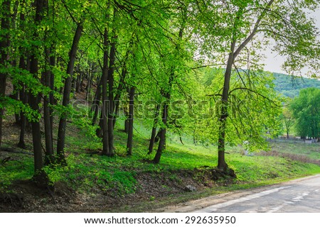 Trees in a green forest in spring - stock photo