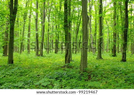 Trees in a green forest in spring