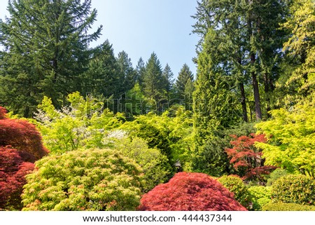 Trees in a Japanese Garden in Portland, Oregon - stock photo