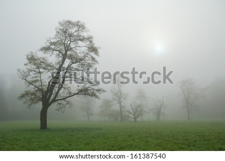 Trees in a misty morning meadow - stock photo