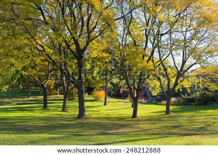 Trees in a park in the fall