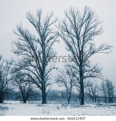 trees in a snowy forest landscape in the countryside