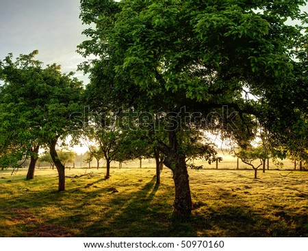 Trees in an old orchard on a sunny day in the countryside.
