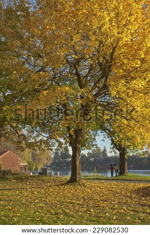 Trees in Autumn colors in Blue Lake Park Oregon. - stock photo