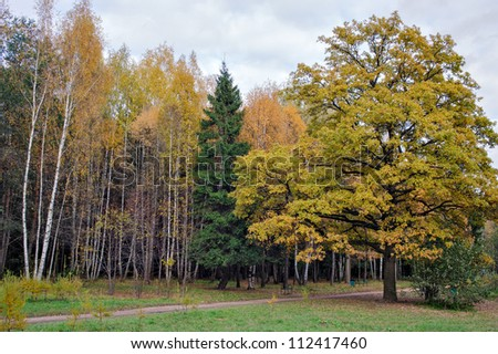 Trees in autumn colors in park