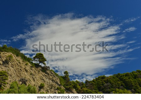 trees in corfu, greece - stock photo