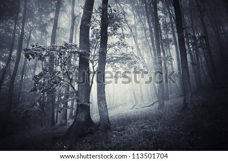 trees in dark forest - stock photo