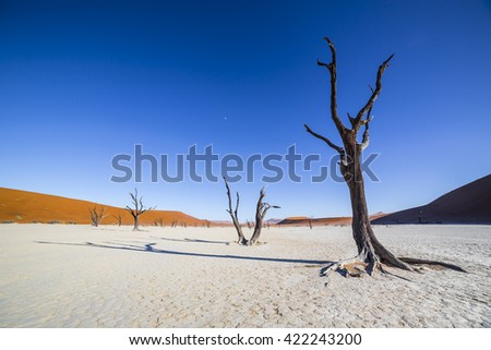 Trees in Deadvlei, or Dead Vlei, a white clay pan located near the more famous salt pan of Sossusvlei, inside the Namib-Naukluft Park in Namibia