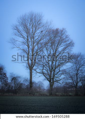 Trees in evening mood after sunset - stock photo