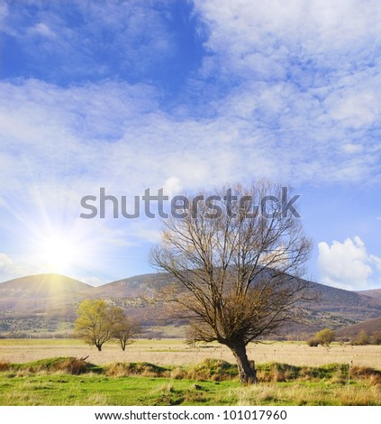 Trees in field - stock photo