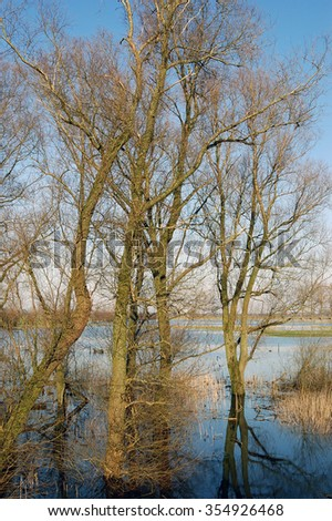 Trees in flooded land in Holland - stock photo