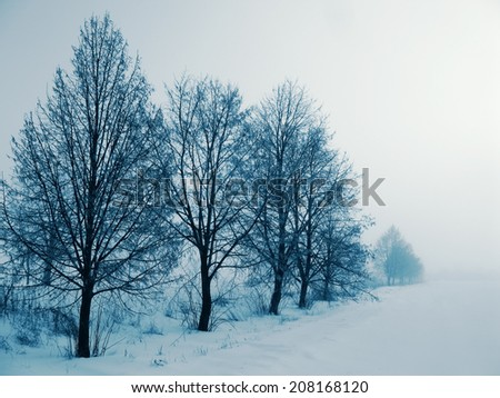 trees in fog in rural areas, the winter season - stock photo