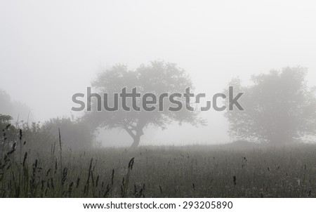 Trees in foggy field, soft focus