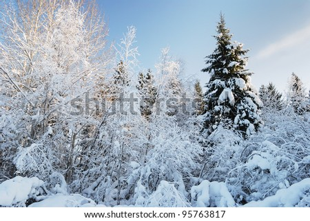 trees in forest after the winter snow