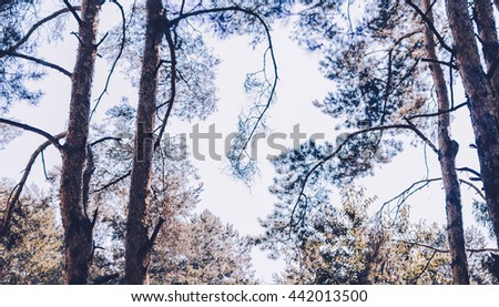 Trees in forest in autumn time, photo with vintage colors - stock photo