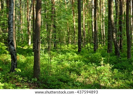 Trees in forest near Saint Petersburg, Russia