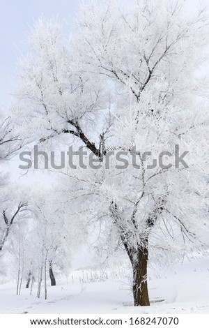 Trees in frost and landscape in snow against blue sky. Winter scene.