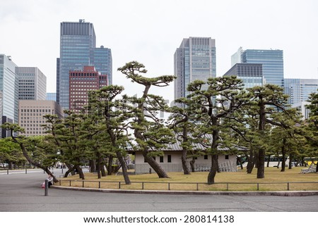 Trees in garden of Tokyo Imperial Palace, center of city, famouse place of Japan - stock photo