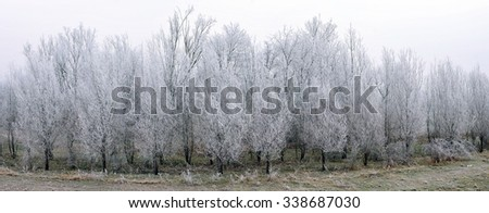 Trees in hoarfrost in the morning - stock photo