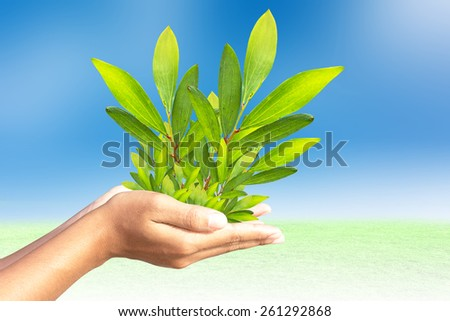 Trees in human hands - stock photo