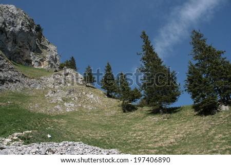 trees in line - stock photo