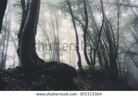 trees in misty forest - stock photo