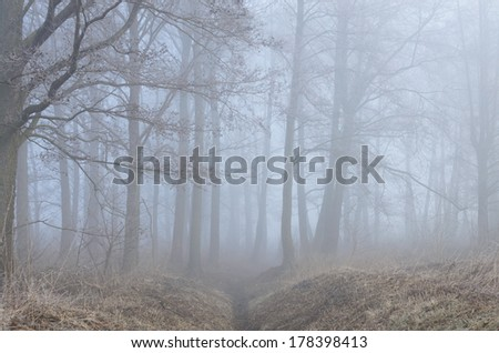 trees in misty forest in morning