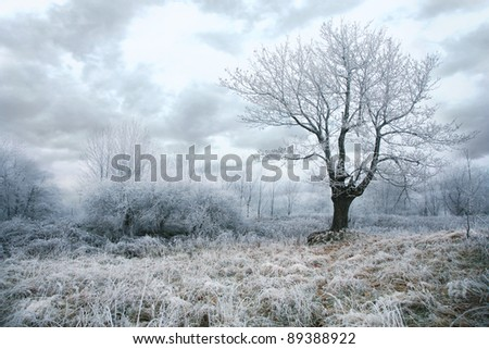 Trees in misty, gloomy winter day. Pasterka village in Poland. Beginning of winter. - stock photo