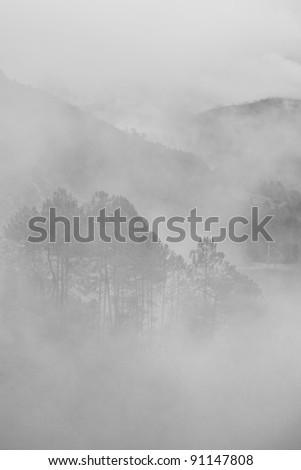 Trees in morning fog - stock photo