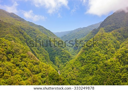 Trees in natural tropical environment - jungle valley - stock photo