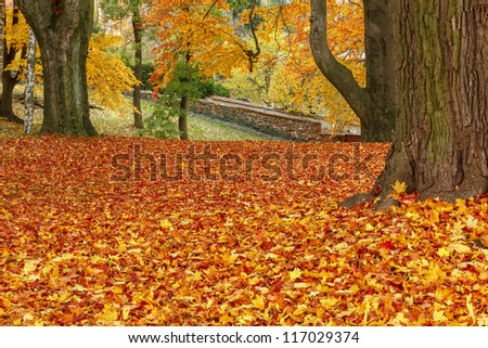 trees in park in autumn with yellow and orange leaves