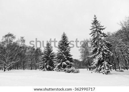 Trees in park in snow