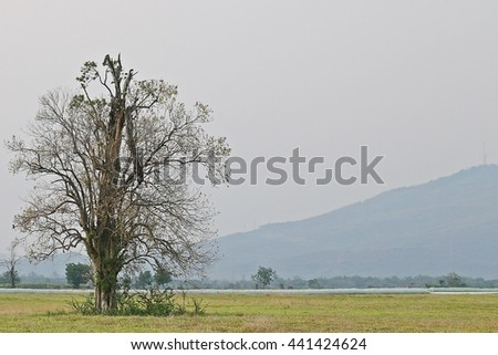 Trees in pastures - stock photo