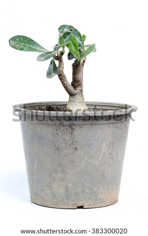 Trees in pots isolated on white background